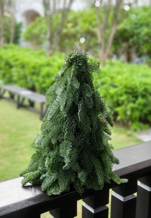 FRESH NOBLE FIR CHRISTMAS TREE 40CM